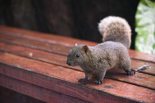 Mammal, Wood, Nature, Cute, Wildlife
