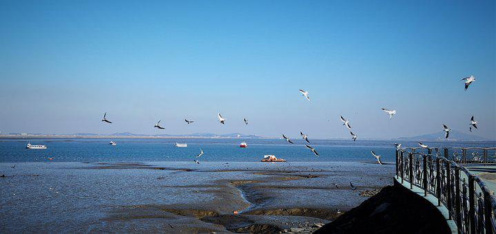 Sea, Seagull, Tidal, Sky, Cloud, Blue, Zheng, Birds