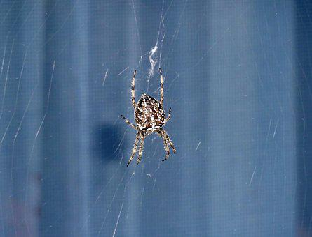 Spider, Window, Canvas, Fear, Phobia, Arachnid