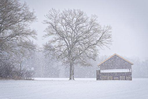Winter, Snow, Frost, Cold, Tree, Snowflakes, Hut