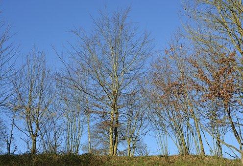 Tree, Bare Trees, Leafless, Nature, Winter Landscape