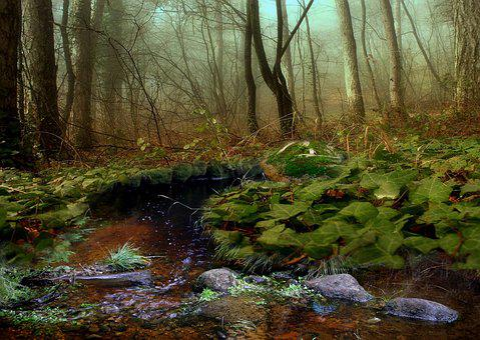 Nature, Tree, Mosses, River, Water, Torrent, Brook