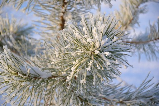 Tree, Pine, Winter, Needles, Snowflakes, Crystals, Snow