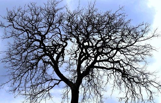 Tree, Branch, Nature, Winter, Stark