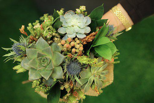 Flower, Nature, Flora, Leaf, Garden, Succulent Plants
