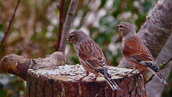 Reed, Spevavý, Little Bird, Tree, A Branch, Forest