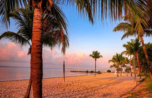 Arecaceae, Beach, The Coast, Sand, Tree, Keywest, Key