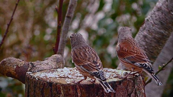 Reed, Spevavý, Little Bird, Tribe, Birds, Tree