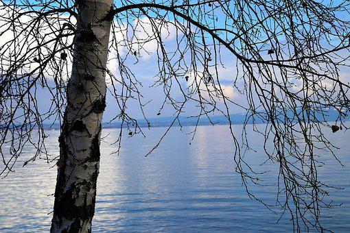 Birch, Water Surface, Lake, Tree, Nature, The Horizon