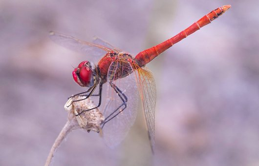Insect, Nature, Wildlife, Animal, Outdoors, Dragonfly