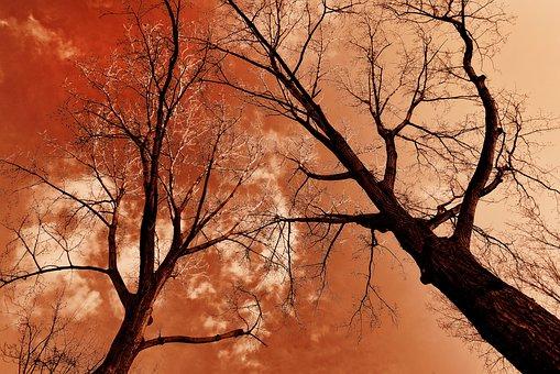 Tree, Tree Top, Trunk, Branch, Bare Tree, Winter Tree