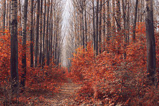 Wood, Autumn, Tree, Sheet, Nature, Landscape, Park