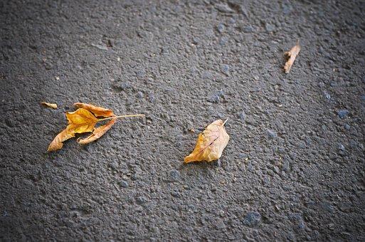 Sheet, Yellow, Autumn, Leaves, Golden, Listopad, Plant