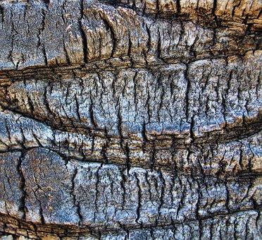 Tree, Bark, Nature, Tribe, Background, Palm, Rau, Grey