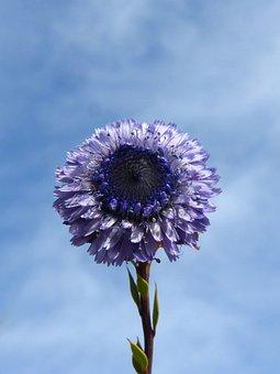 Flower, Lilac, Purple, Beauty, Sky, Plant, Nature