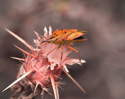 Nature, Leaf, Flora, Outdoors, Insect, Bug, Macro