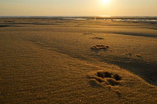 Sand, Coast, Beach, Desert, Sunset, Dunes, Landscape