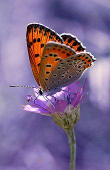 Butterfly, Coloring, Insecta, Flower, Rest, Nature