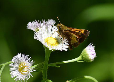 Nature, Insect, Flora, Flower, Summer, Moth