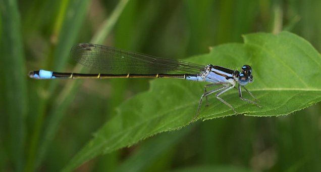 Nature, Insect, Wildlife, Outdoors, Dragonfly