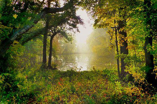 Nature, Tree, Park, Pond, Landscape, Fall Leaves