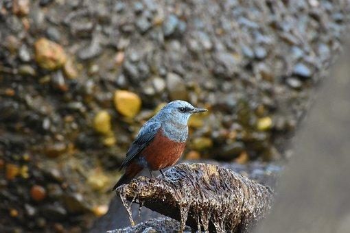 Animal, Sea, Rock, Bird, Wild Birds