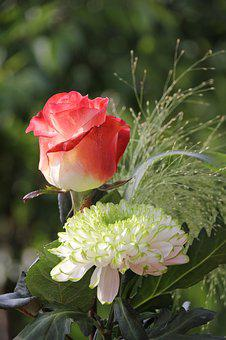 Rose White And Red, Dahlia White-green