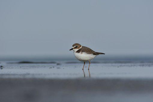 Animal, Sea, Bird, Wild Birds, Little Bird