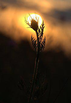 Plant, Sunset, Shadows, Silhouette, In The Evening