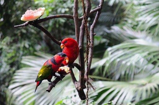 Nature, Tropical, Tree, Leaf, Bird, Wood, Outdoors