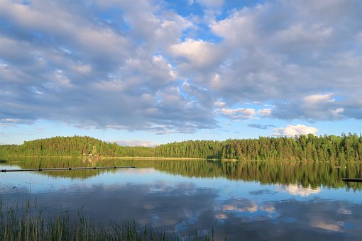 Lake, Forest, Nature, Sweden, Water, Stockholm