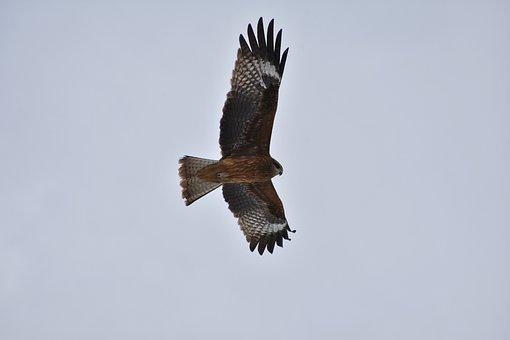 Animal, Sky, Bird, Wild Birds, In Africa