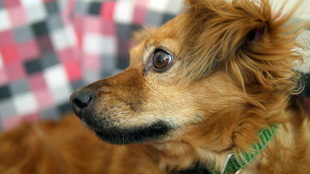 Dog, Animal, Cute, Canine, Mammal, Pet, Puppy, Portrait