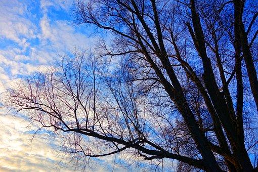 Tree, Tree Top, Winter Tree, Deciduous, Bare Tree