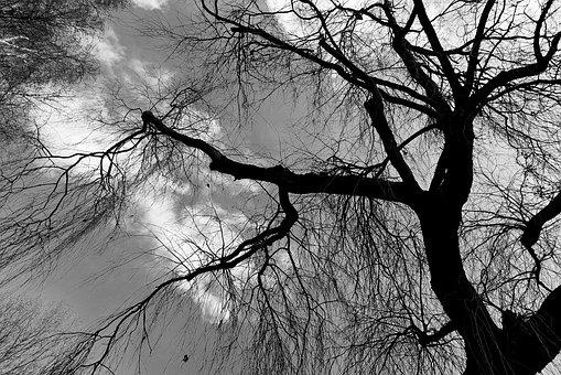 Weeping Willow, Willow, Tree, Tree Top, Branch