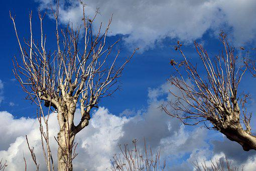 Crown, Kahl, Clouds, Blue, Aesthetic, Branches