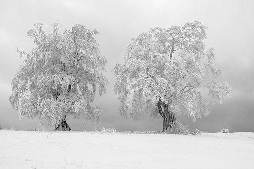 Hoarfrost, Tree, Fog, Fog Day, Foggy, Winter, Snow