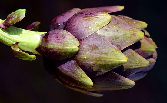 Artichoke, Food, Vegetables, Healthy, Spring, Winter
