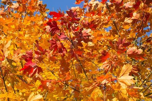 Leaves, Autumn, Golden Autumn, Color