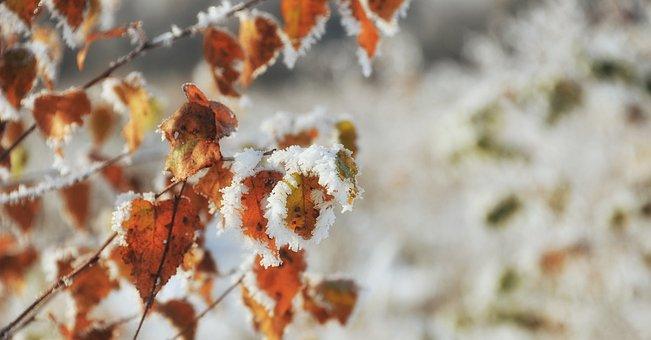 Winter, Season, Frost, Leaf, Nature, Birch, Moor, Peat