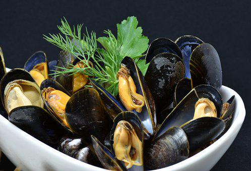 Mussels, Mussel, Common Mussel, Mytilidae, Cook