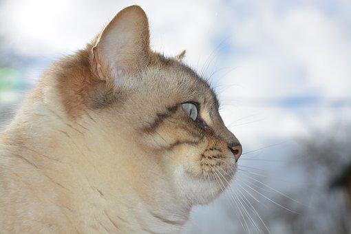 Cat, Cat Head, Profile Of Cat, Mustache Cat, Pussy Nala