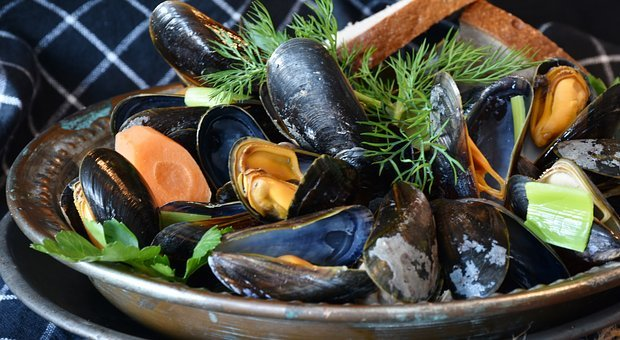 Mussels, Mussel, Seafood, Sea, Common Mussel, Mytilidae