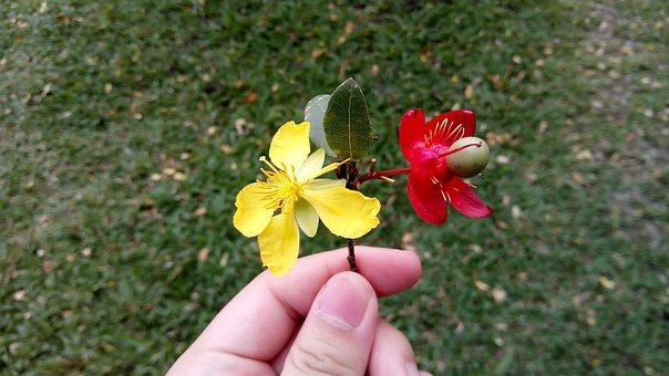 Flower Mickey Mouse, Flowers, Red Flowers