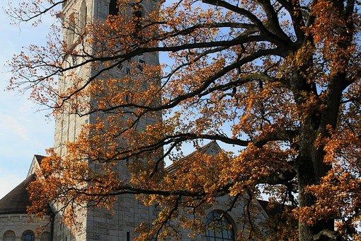 Tree, Autumn, Nature, Season, Leaf, Blue Sky, Branch