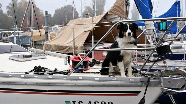 Dog, Thoroughbred, Sailboat, Yacht, Boat, The Sail