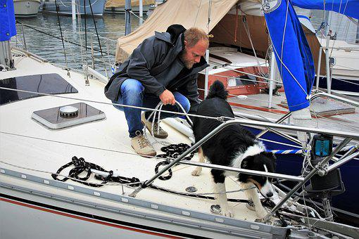 Dog, Sailboat, Transport, Yacht, Lake, Boat, Ship Water