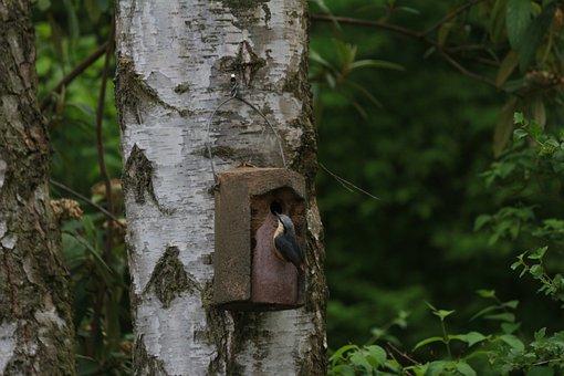 Tree, Wood, Bark, Nature, Tribe, Kleiber, Nesting Box