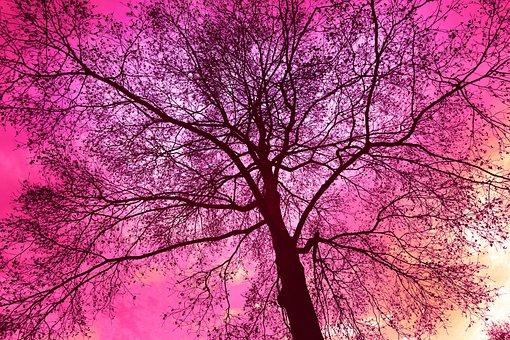 Tree, Tree Top, Bare Branch, Winter Tree, Bare Tree