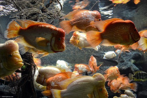 Fish, Underwater, Nature, Ocean, Color, Marine, Water